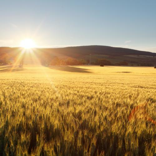 Afterwork – Transformation durable du système agroalimentaire français : de la défiance à la confiance – mercredi 26 février à 18h30